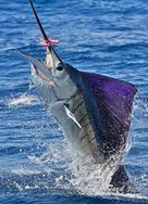 sailfish-offshore-fishing